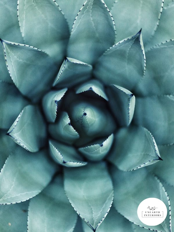 Beautiful Green Succulent